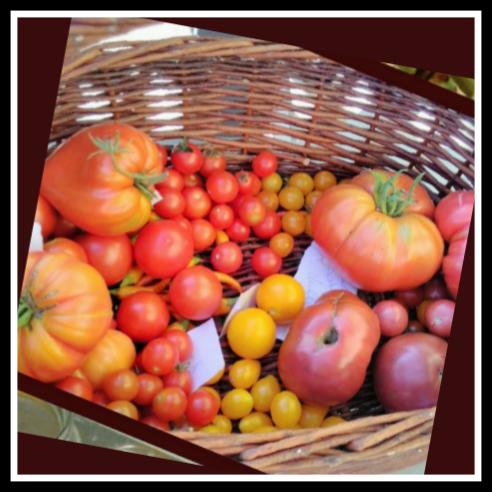 >> Tomatenanzucht im März<<