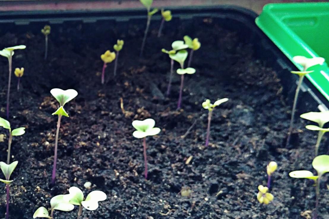 Jungpflanzenanzucht im März