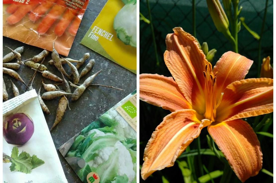 Gartenrundgang & was noch rein ins Beetkann