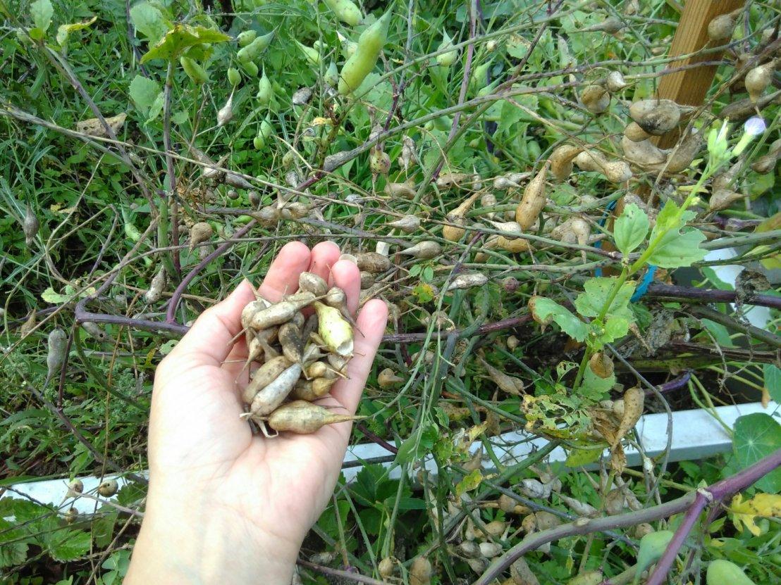 Saatgutgewinnung – damit es auch nächstes Jahr schön grünwird….